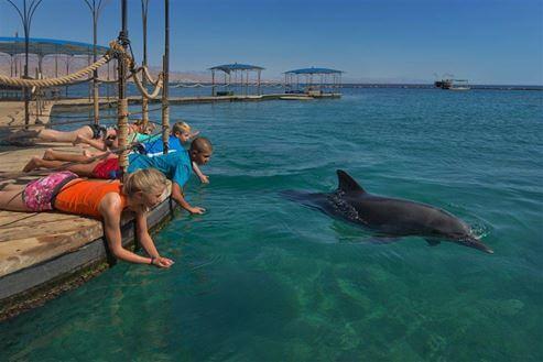 ילדים משחקים עם דולפין