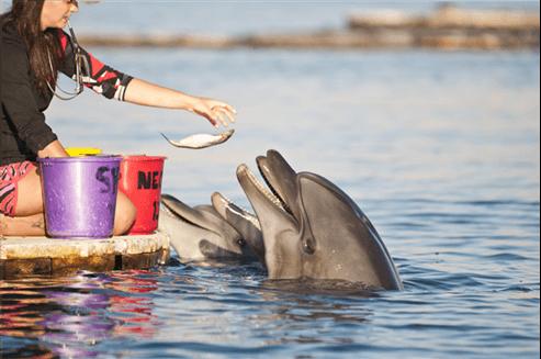 האכלה של דולפין
