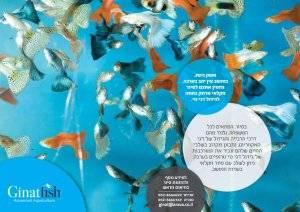 ginat's Fish Farm